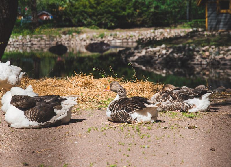 Lintulammikolla voit ihastella päivää paistattelevia siivekkäitä.