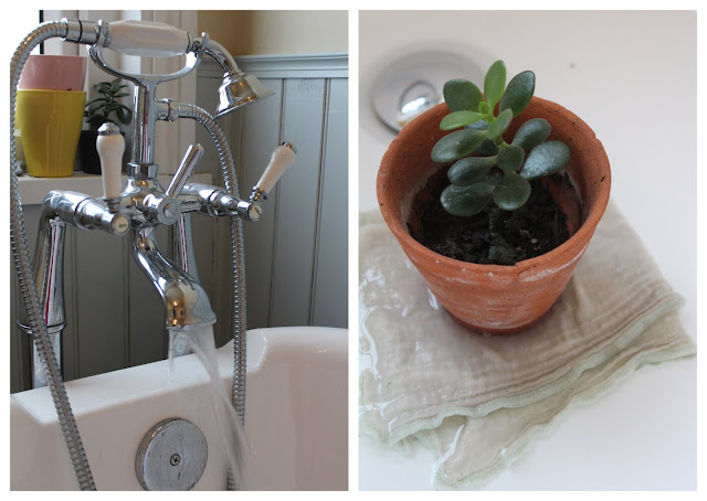 keeping plants in the bath when going away