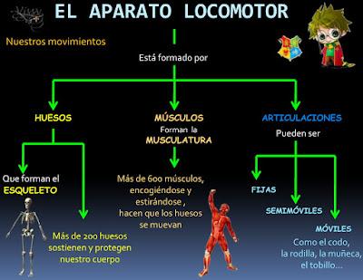 http://www.vjssv.es/nemo/archivos/004_el_aparato_locomotor.swf