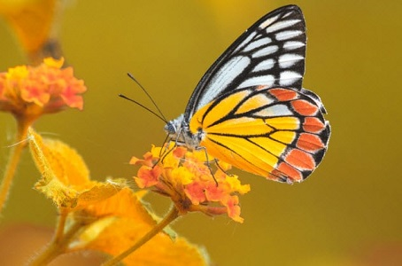 Kelebeklerin Yaptığı 10 İnanılmaz Faydalı Şeyler