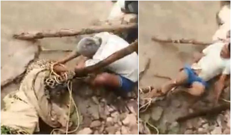 Προσπαθούσαν να σώσουν μία λεοπάρδαλη αλλά αυτή... τους επιτέθηκε (βίντεο)