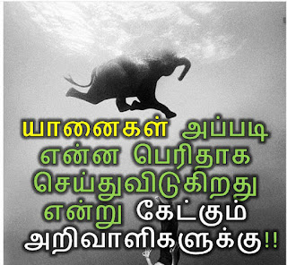 Yanai sirappu, 18 latcham maram nadum vilanginam. ஒரு யானை ஒரு மாதத்திற்கு 3000 மரங்களை நடுகிறது. வருடத்திற்கு 36 ஆயிரத்து ஐநூறு மரங்கள். மொத்தமாகப் பார்த்தால் ஒரே ஒரு யானை தன் வாழ்நாளில் 18 லட்சத்து 25 ஆயிரம் மரங்கள் வளரக் காரணமாகிறது. Therindhukolvom, அரிய செய்திகள், தெரிந்து கொள்ளுங்கள், GK in Tamil,