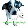 cachorra alimentos comidas pueden comer perros dog food can 2018 shurkonrad
