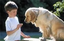 Vitaminas Para Perros Garantiza la Salud Para su Amigo Canino