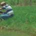 Embrapa desenvolve sistema de banco de dados para biomonitoramento da tilapicultura em viveiros escavados