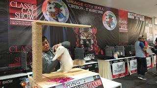 Classic Cat Show Sukses Diadakan Di Cirebon