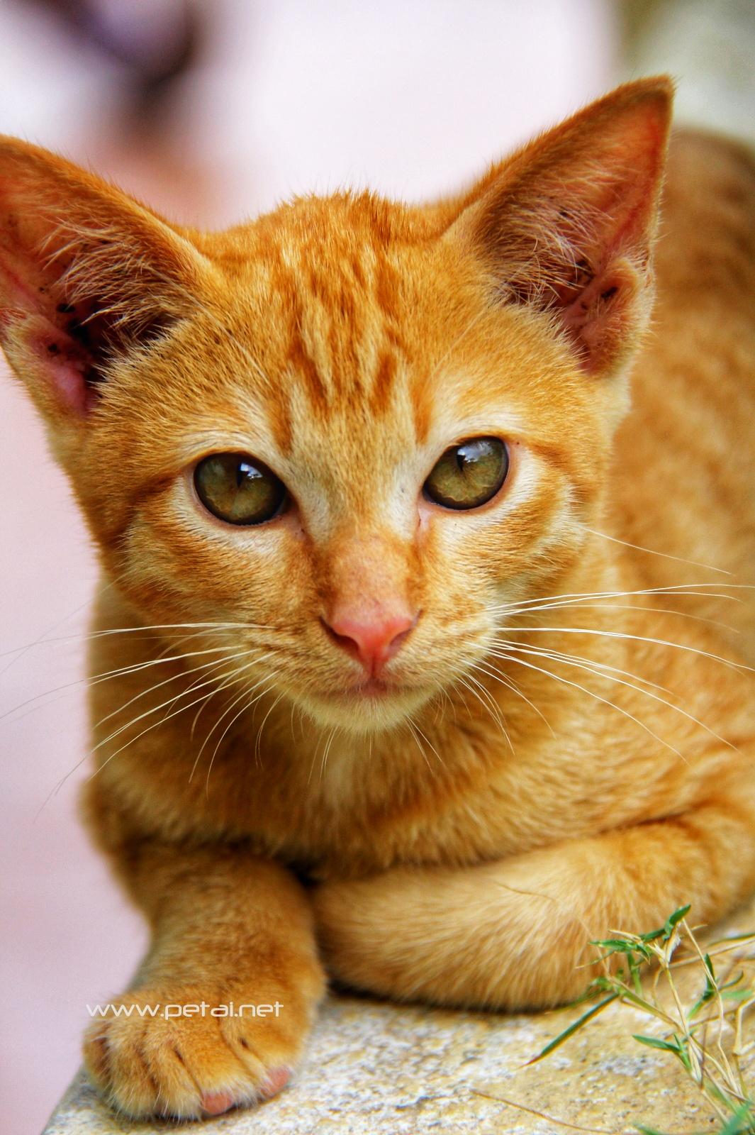 Mengenang Kucing Kesayangan Kami Oyen 4