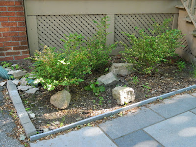 by Paul Jung Gardening Services--a Toronto Gardening Company Mount Pleasant East Davisville New Front Shade Garden Before