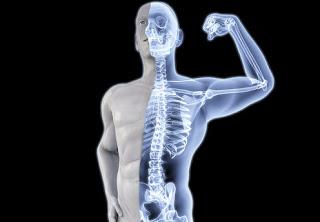foods for strong bones in urdu