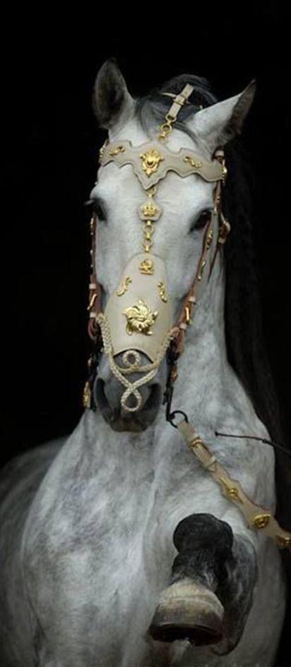 imagenes de  caballos adornados
