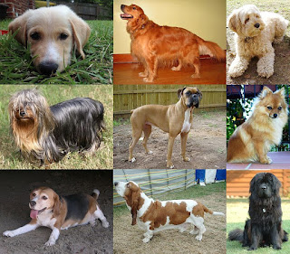 Dog-pet-pets-dog breeds