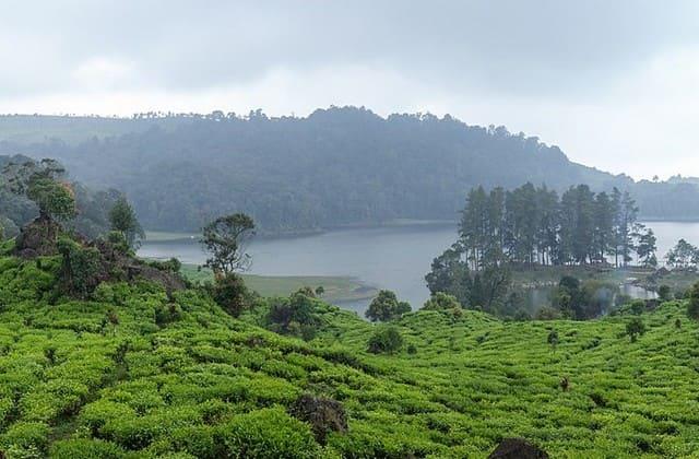 Situ Patenggang, sebuah danau yang indah dan menjadi tempat wisata alam Bandung yang terkenal dengan pemandangan teh yang sangat natural