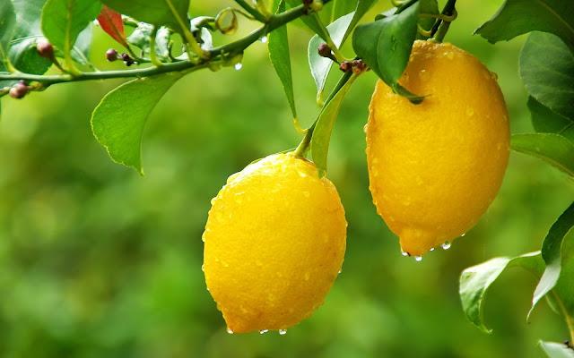 ما فائدة الليمون