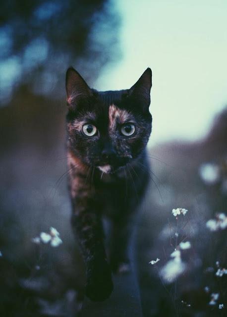 Những khoảnh khắc cùng mèo cưng đi khắp nhân gian tuyệt đẹp