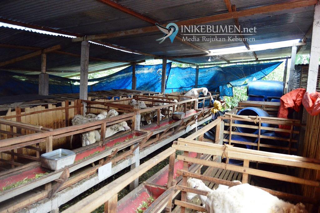 Distapang Kebumen Butuh 68 Tenaga Pendamping Pertanian Non ASN
