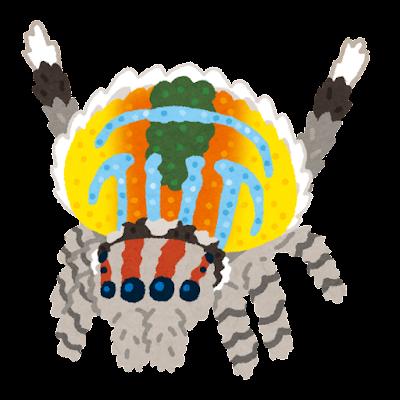 クジャクグモのイラスト