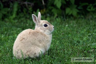 photographie animal lapin