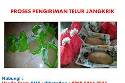 Harga Telur Jangkrik Alam Terbaru #UPDATE JULI 2018