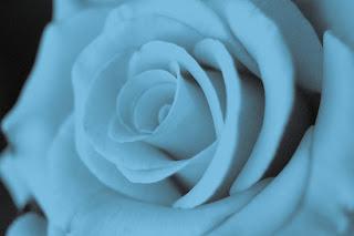 diseño de color azul-flores