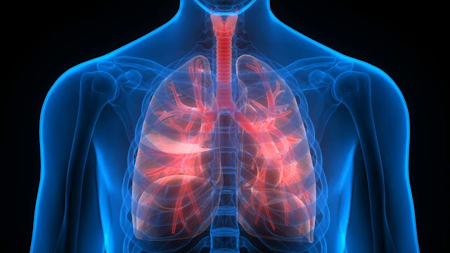 Scientists Have Discovered A Secret Function Of Lungs