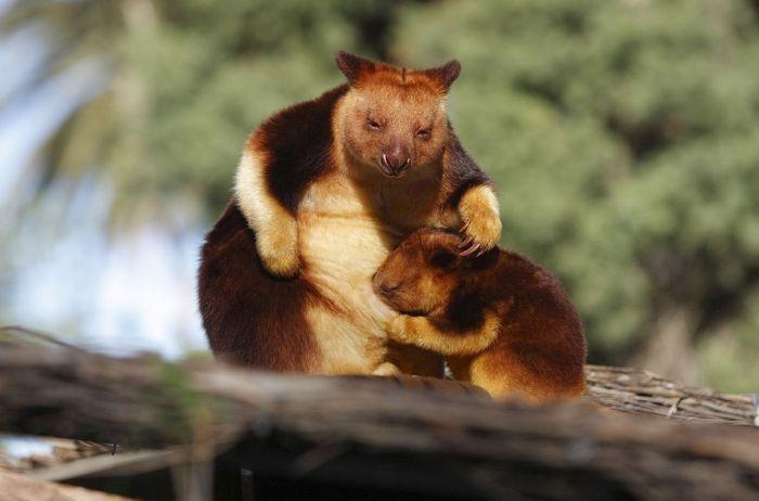 animals strange kangaroo animal tree cute looking confuse cuddly every mind straight planet cool