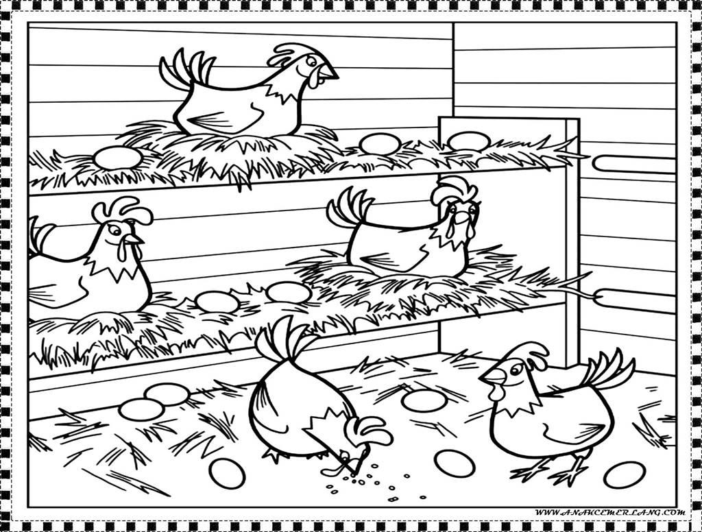 Animasi Kartun Ayam | Kolek Gambar