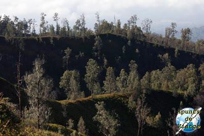 Coladas de lava llenas de vegetación
