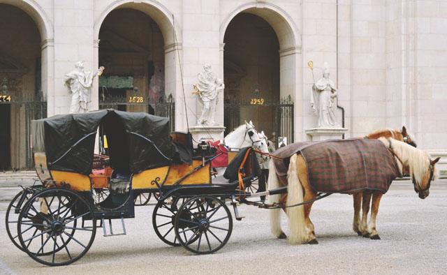 Salzburg horse pony rides
