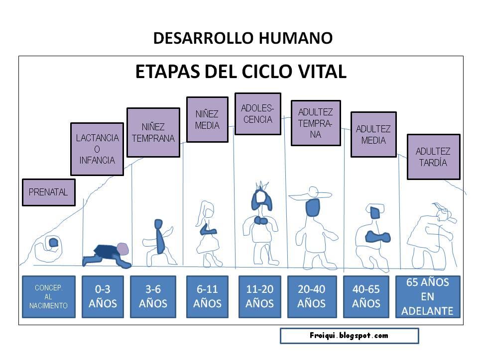 Ciclo Vital Del Ser Humano On Emaze: Ciclo Vital Desarrollo Humano