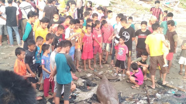 Warga Barru di Hebohkan dengan Penemuan Ikan Duyung Sepanjang 3 Meter yang Terdampar di Pantai Sumpang