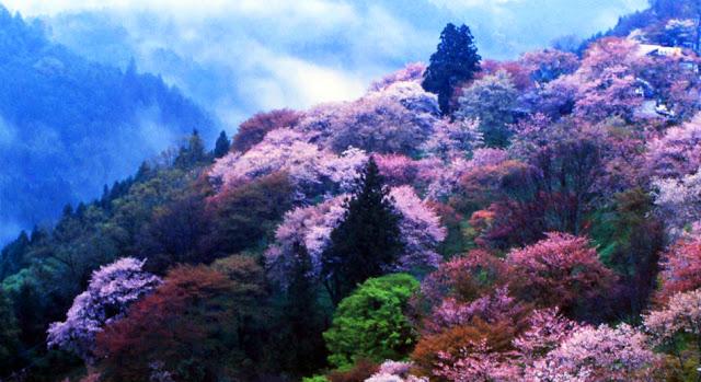 El turismo a Japón se dispara