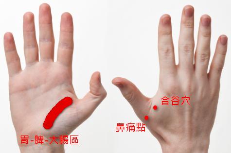 手掌穴道 - 鼻竇炎按摩穴位 - 鼻痛點、胃-脾-大腸區、合谷穴
