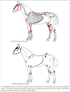 Musings at Minkiewicz Studios LLC: Equine Anatomy and