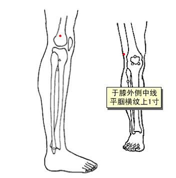 關儀穴位 | 關儀穴痛位置 - 穴道按摩經絡圖解 | Source:zhongyibaike.com