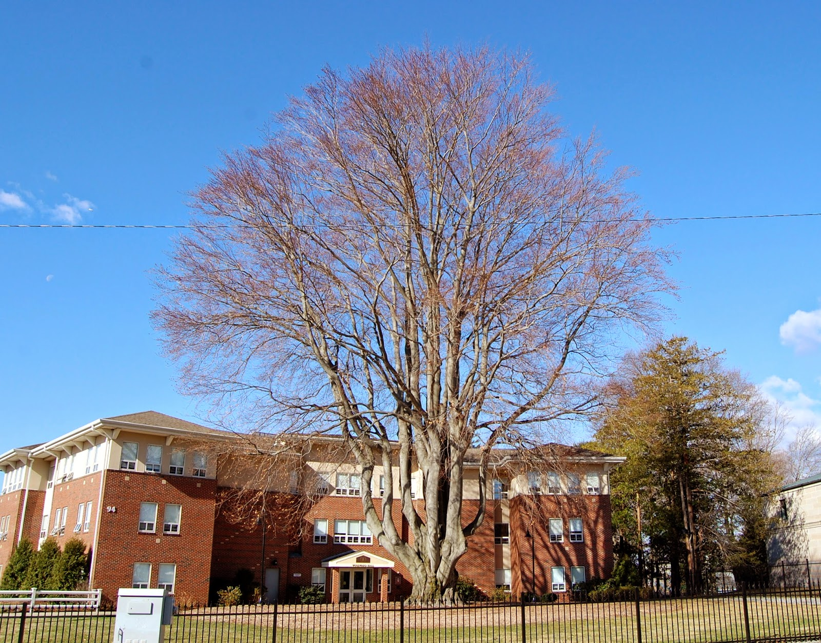 the big tree at Dean College
