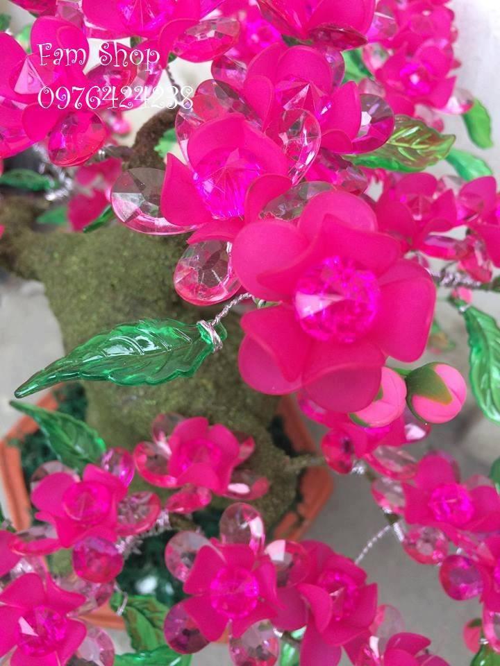 Canh hoa dao lam goc bonsai mai dao o Hoai Duc
