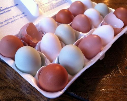 Farm-Raised Eggs ♥ KitchenParade.com