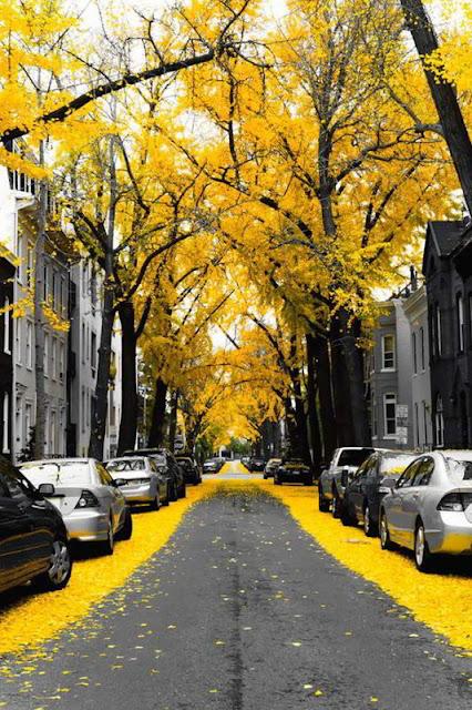 واشنطن العاصمة ,الولايات المتحدة الأمريكية Washington Dc, Usa