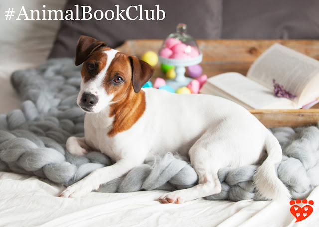 Book Club: How Dogs Love Us. A dog on the bed with a book and marshmallows