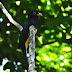 Estado do Tocantins é um Hotspot para a prática de Birdwatching