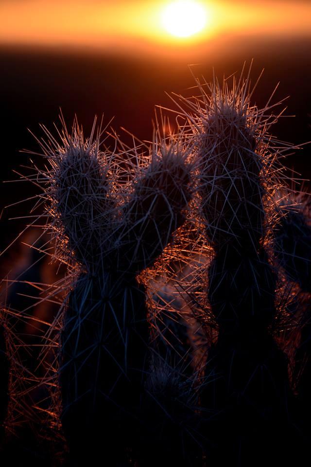 Cultivar un cactus