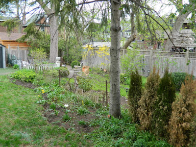 by Paul Jung Gardening Services--a Toronto Gardening Company Riverdale Backyard Garden Spring Cleanup After