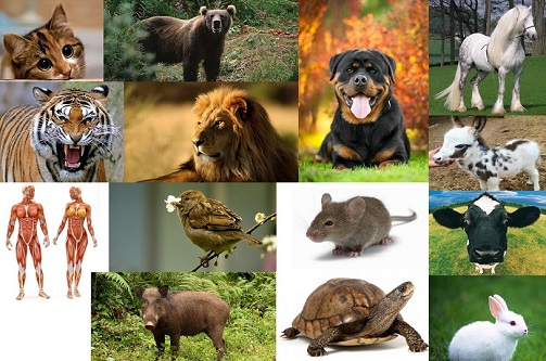 Etçil, Otçul ve Hem Etçil Hemde Otçul Hayvanlar