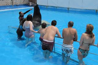 Aprendiendo Sobre leones marinos.