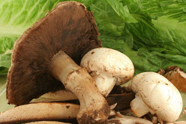 lista cu ciupercile otravitoare
