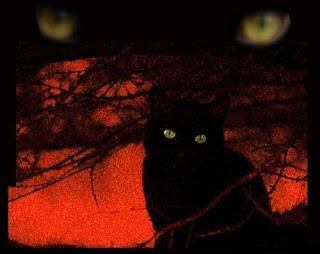 gato-falso-traicionero-mito