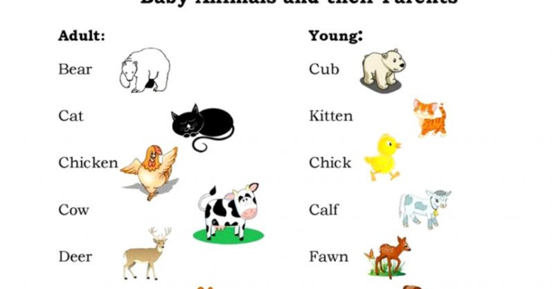 All pictures of baby animals names and their parents