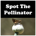 Spot The Pollinator