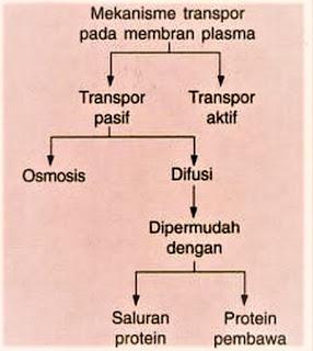 transpor membran sel