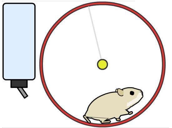 Dibujos Infantiles Para Colorear De Hamsters: RECURSOS Y ACTIVIDADES PARA